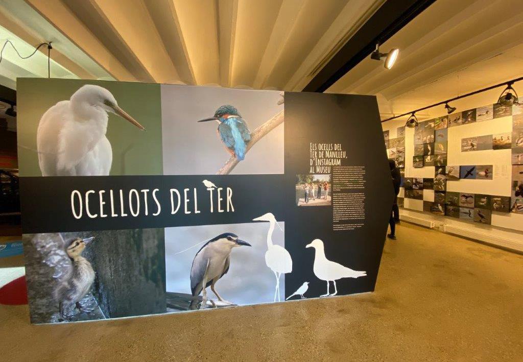 Museudelter_exposició_ocellots_del_ter (1)