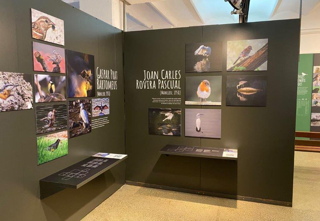Museudelter_exposició_ocellots_del_ter (2)