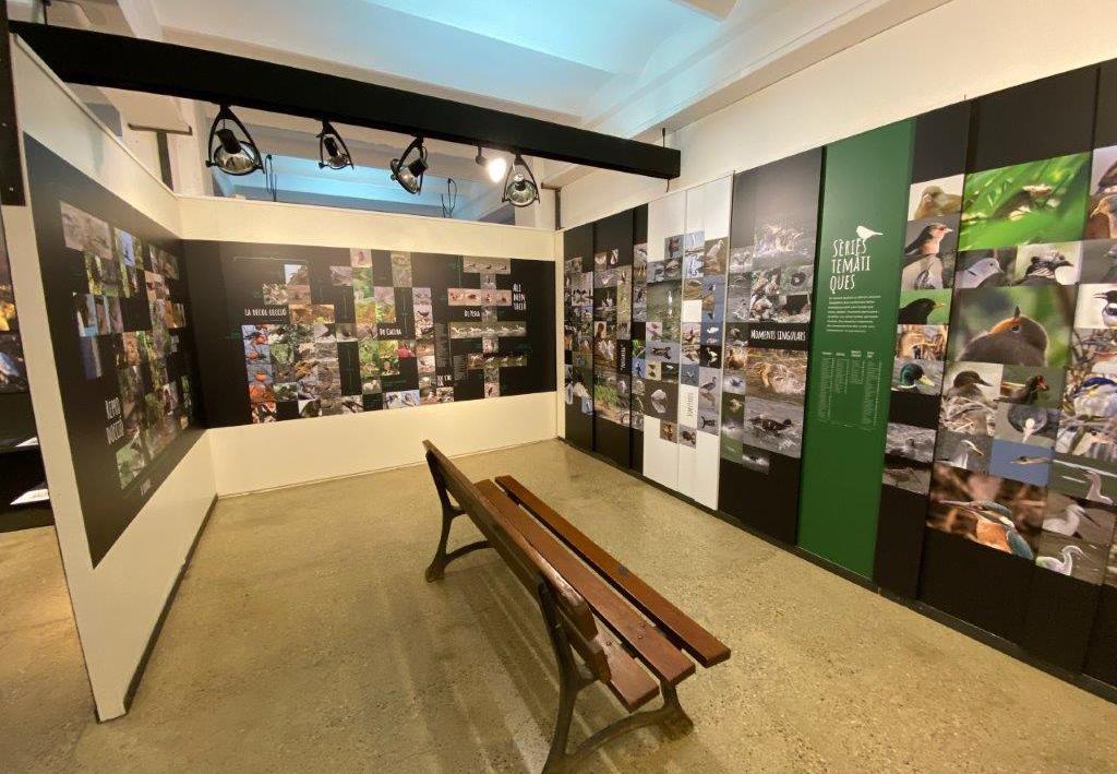 Museudelter_exposició_ocellots_del_ter (4)