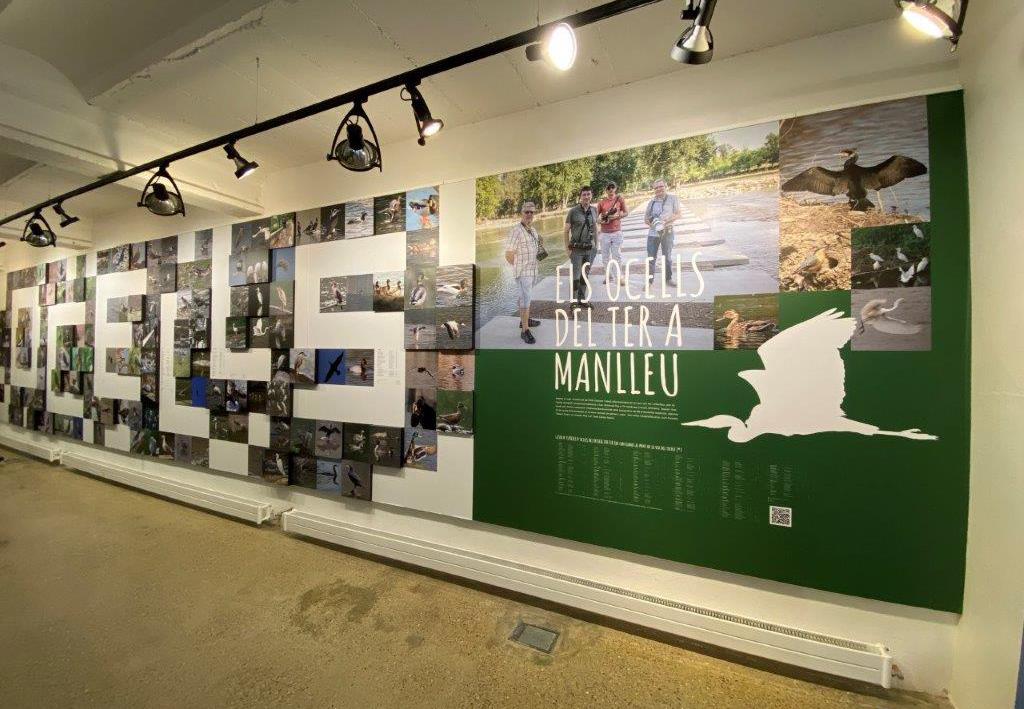 Museudelter_exposició_ocellots_del_ter (8)